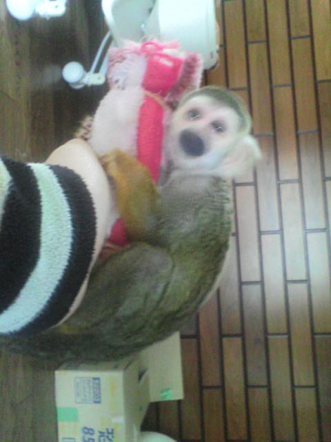 我が家にリス猿が…